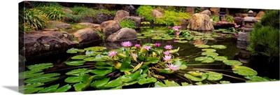 Japanese Garden, University of California, Los Angeles, California