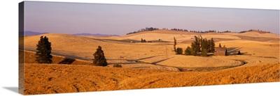 Lentil Field Palouse Country Spokane County WA