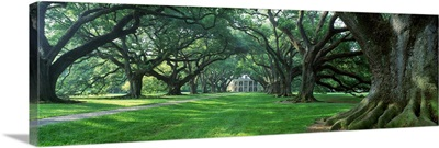 Louisiana, New Orleans, plantation home through alley of oak trees