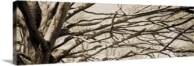 Low angle view of a bare tree