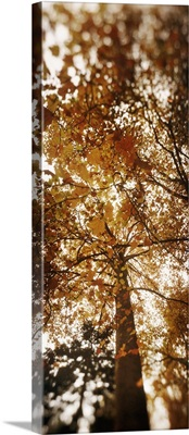 Low angle view of autumn trees Volunteer Park Capitol Hill Seattle King County Washington State