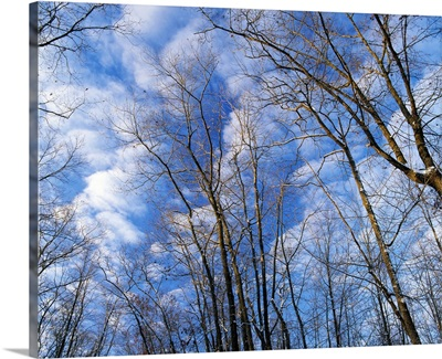 Low angle view of bare tree branches, clouds in blue sky, winter, Marilie Educational Forest Reserve, Iowa