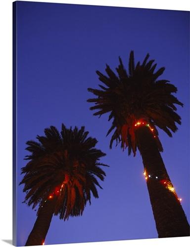 low angle view of christmas lights on palm trees lit up at dusk san