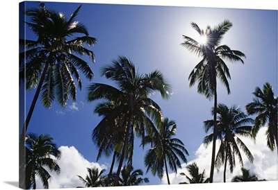 Low-Angle View Of Coconut Palm Trees