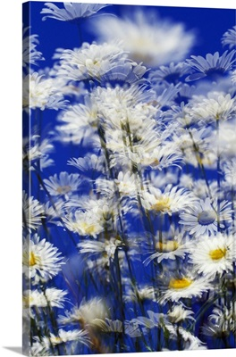 Low-Angle View Of Flowers Blowing In Wind