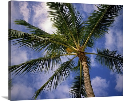 Low-angle view of palm tree fronds, white clouds in blue sky.
