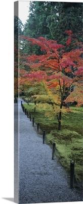 Maple tree at the roadside, Sanzen-in Temple, Kyoto City, Kyoto Prefecture, Japan