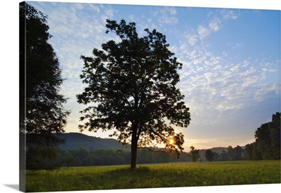 Meadow trees silhouetted by sunset light, Cades Cove, Great Smoky Mountains National Park, Tennessee