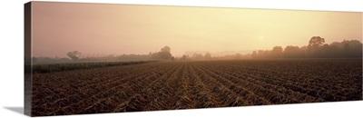 Misty Field Tayside Scotland