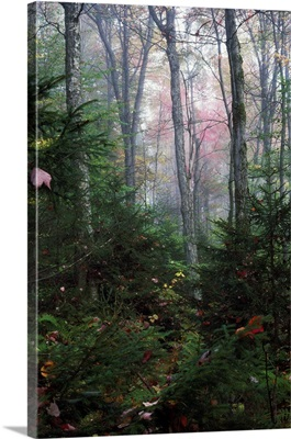 Misty forest, New York