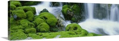 Moss and Stream Gunma Japan