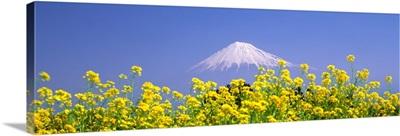 Mt Fuji Shizuoka Japan