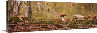 Mushroom on a tree trunk, Baden-Wurttemberg, Germany