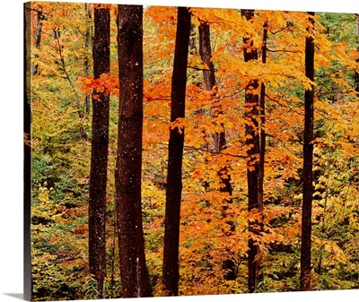 New York State, Adirondack Mountains, Dense forest in the Old Forge