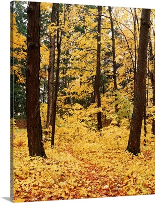 New York State, Erie County, Emery Park, Forest covered with dry autumn leaves