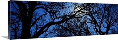Oak Trees TX