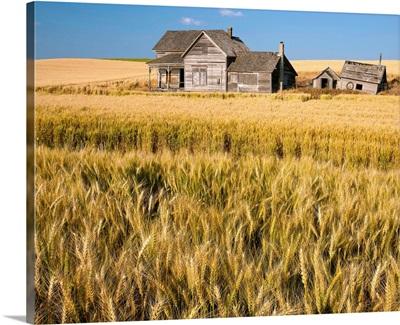 Old abandoned farmhouse in a wheat field, Palouse, Washington State