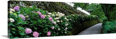 Old Wall with Hydrangea Hasedera-sando Sakurai Nara Japan