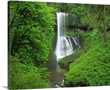 Oregon, Silver Falls State Park, Waterfall in the tropical rainforest