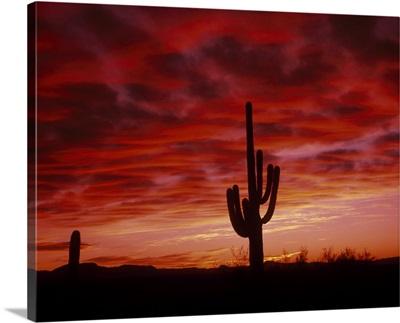 Organ Pipe Cactus State Park AZ