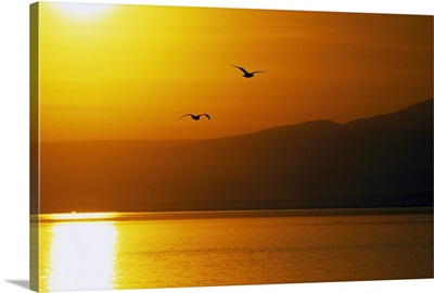 Pair of seagulls flying over Cook Inlet at sunset, water reflection, Alaska