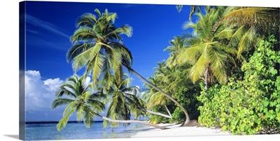 Palm Beach The Maldives