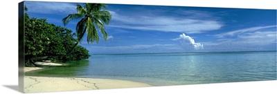 Palm tree on a coast, French Polynesia