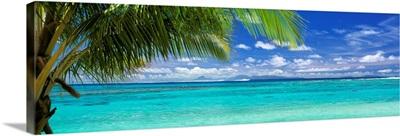 Palm tree on the beach, Huahine Island, Society Islands, French Polynesia