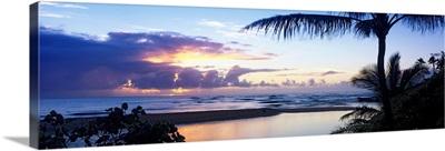 Palm tree on the beach, Wailua Bay, Kauai, Hawaii
