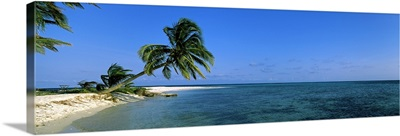 Palm tree overhanging on the beach, Laughing Bird Caye, Victoria Channel, Belize