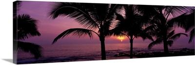 Palm Trees Kailua-Kona The Big Island HI