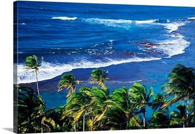 Palm Trees Ke'e Beach HI