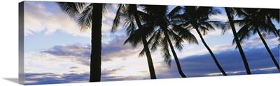 Palm Trees Maui HI