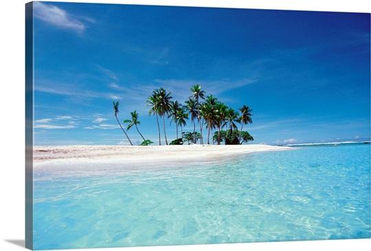 Palm trees on beach II
