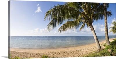 Palm trees on the beach, Anini Beach, Kauai, Hawaii
