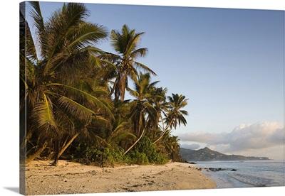 Palm trees on the beach, Anse Marie Louise Beach, Mahe Island, Seychelles