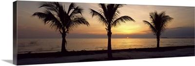 Palm trees on the beach at dusk, Miami, Miami-Dade County, Florida