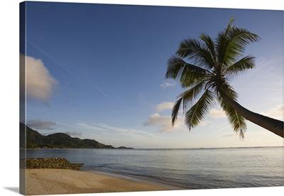 Palm trees on the beach, Fairyland Beach, Mahe Island, Seychelles