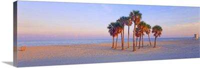 Palm trees on the beach, Florida