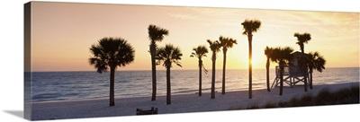 Palm trees on the beach, Gulf of Mexico, Lido Beach, St. Armands Key, Florida