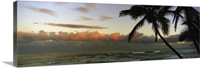 Palm trees on the beach, Hawaii,