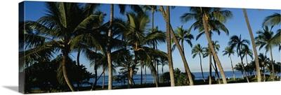 Palm trees on the beach, Hawaii