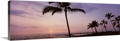 Palm trees on the beach, Keauhou, South Kona, Hawaii County, Hawaii