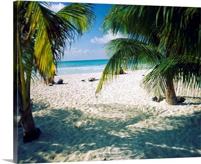Palm trees on the beach, North Beach, Isla Mujeres, Quintana Roo, Mexico