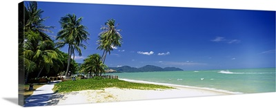 Palm trees on the beach, Penang State, Malaysia