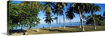 Palm trees on the beach Puerto La Cruz Anzoategui State Venezuela