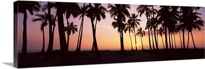 Palm trees on the beach, Pu'u Honua O Honaunau, Hawaii