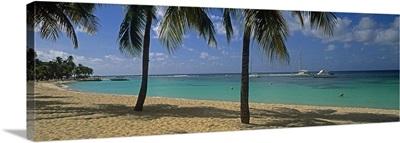Palm trees on the beach, Sainte Anne Beach, Sainte Anne, Grande Terre, Guadeloupe