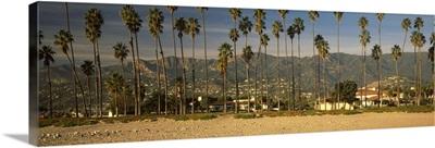 Palm trees on the beach, Santa Barbara, California,
