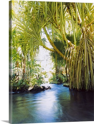 Palm trees over hot spring, Tabacon, Costa Rica